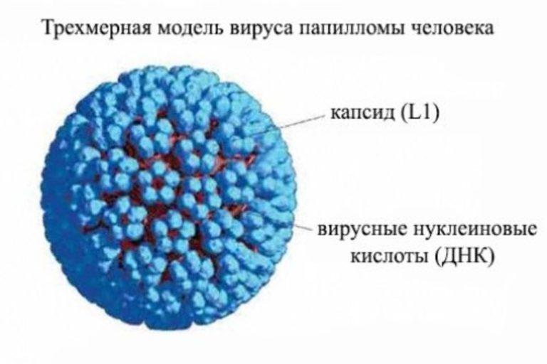 вакцина от папилломы